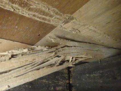 ヤマトシロアリの住宅被害1