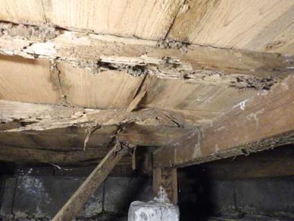 ヤマトシロアリの住宅被害2