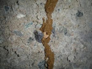 黒羽蟻の床下蟻道