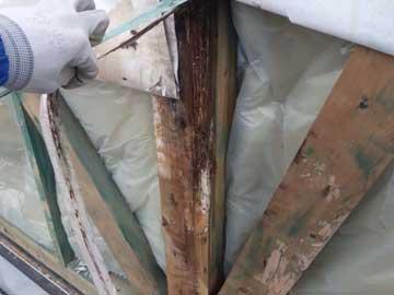 壁解体のヤマトシロアリ駆除