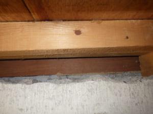 勝手口からの白蟻の侵入