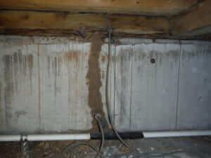 羽アリの原因の床下調査