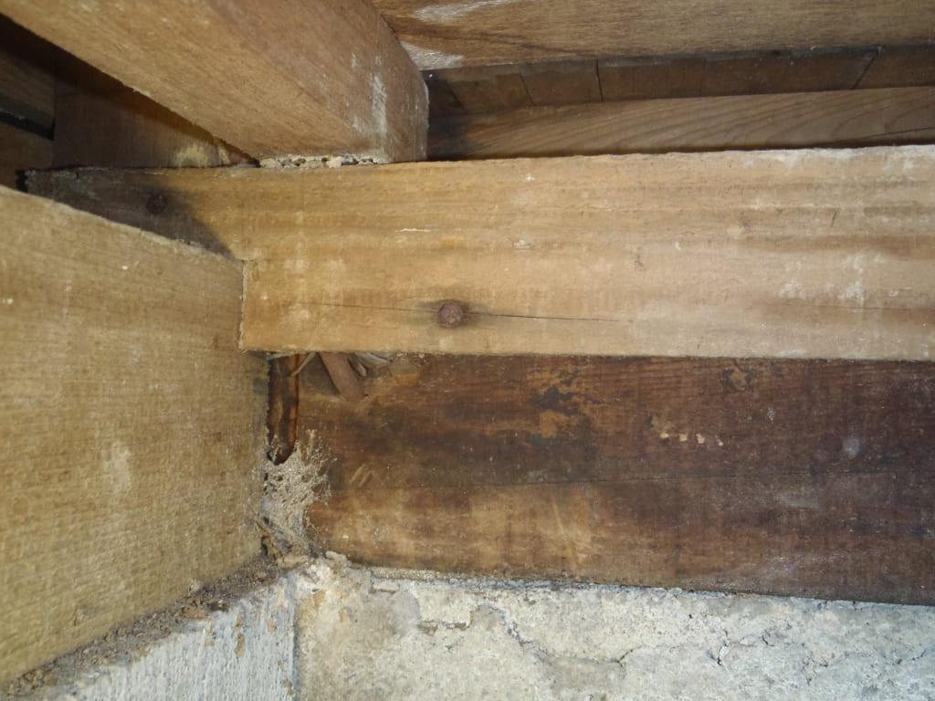 福岡県久留米市H邸の羽アリ駆除の写真