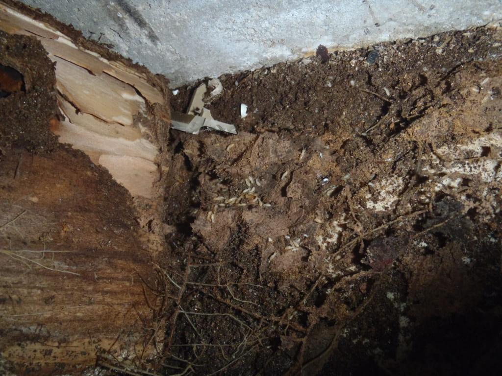 糟屋郡宇美町のK邸でのシロアリ駆除の事前調査