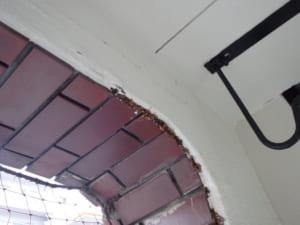 福岡市中央区A邸羽アリ駆除の調査