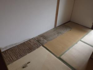 福岡県北九州市戸畑区での羽アリ駆除調査1