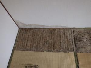 福岡県北九州市戸畑区での羽アリ駆除調査2