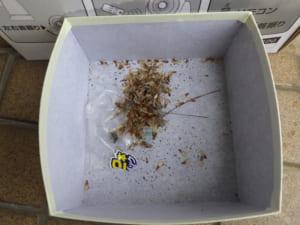 和歌山県田辺市での羽アリ駆除調査1