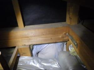 和歌山県田辺市での羽アリ駆除調査T邸天井裏写真2