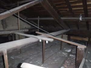 天井裏の羽アリ調査