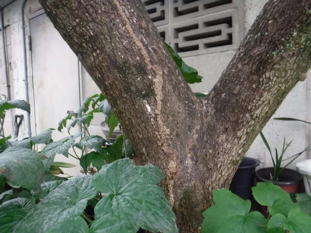 枯木倒木シロアリ調査