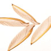 羽アリの羽