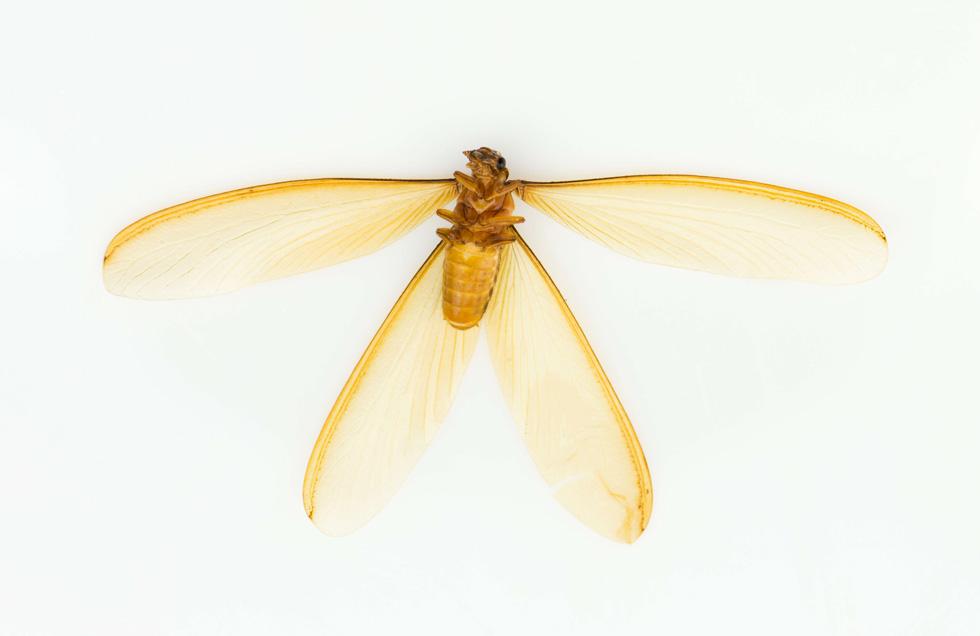 梅雨の羽アリ