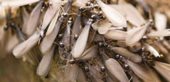 羽アリの大量発生