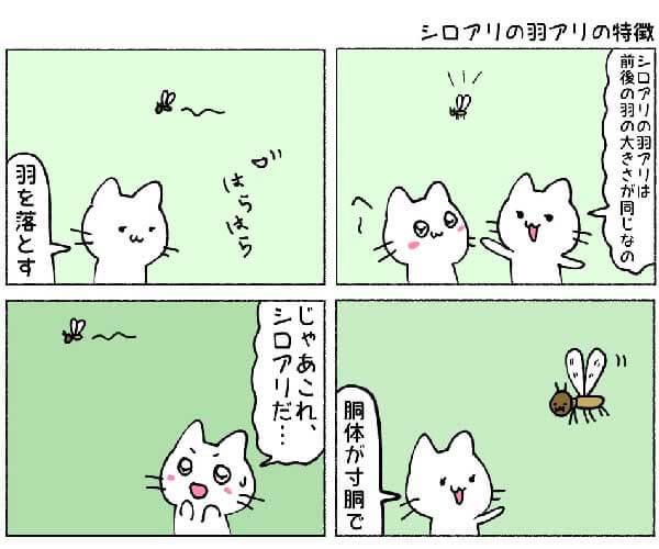 シロアリの羽アリの特徴